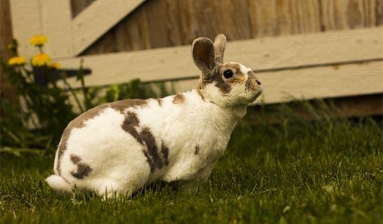Dex, Rex Rabbit