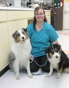 Crystal, Kennel at Bradenton Animal Hospital