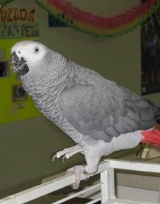 Rudi, Entertainer at Bradenton Animal Hospital