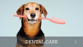 Pet dental care offered in Scottsdale