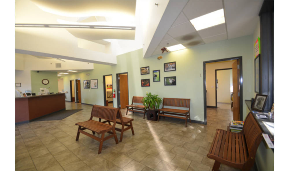In the lobby at Animal Medical Clinic - Wheaton