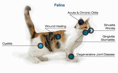 Laser therapy for cats in Torrance