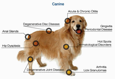Laser therapy for dogs in Torrance