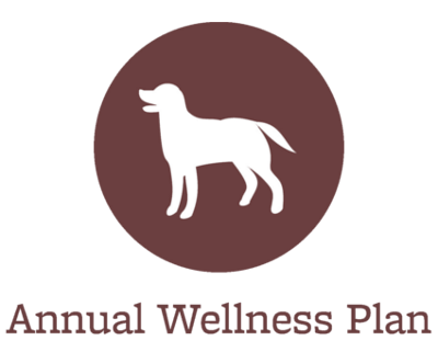 Animal Hospital wellness plans offered in Port Orchard