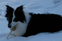 Dog in snow at {{location_name}}