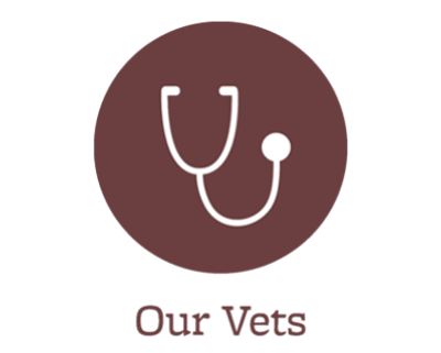 Our animal hospital veterinarians in Port Orchard