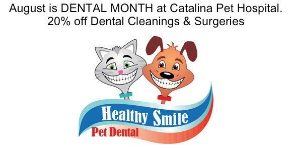 August is Dental Month at Catalina Pet Hospital