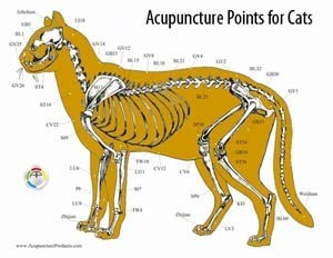 Acupuncture points for cats in East Amherst