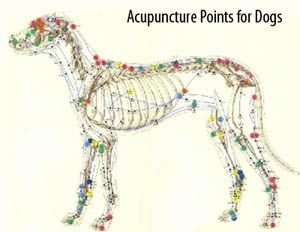 Acupuncture point for dogs in East Amherst
