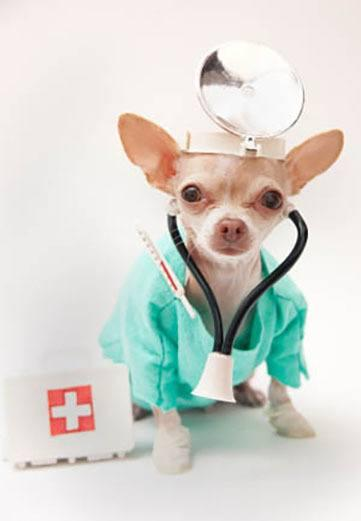 Surgical FAQs at Hendricks Veterinary Hospital