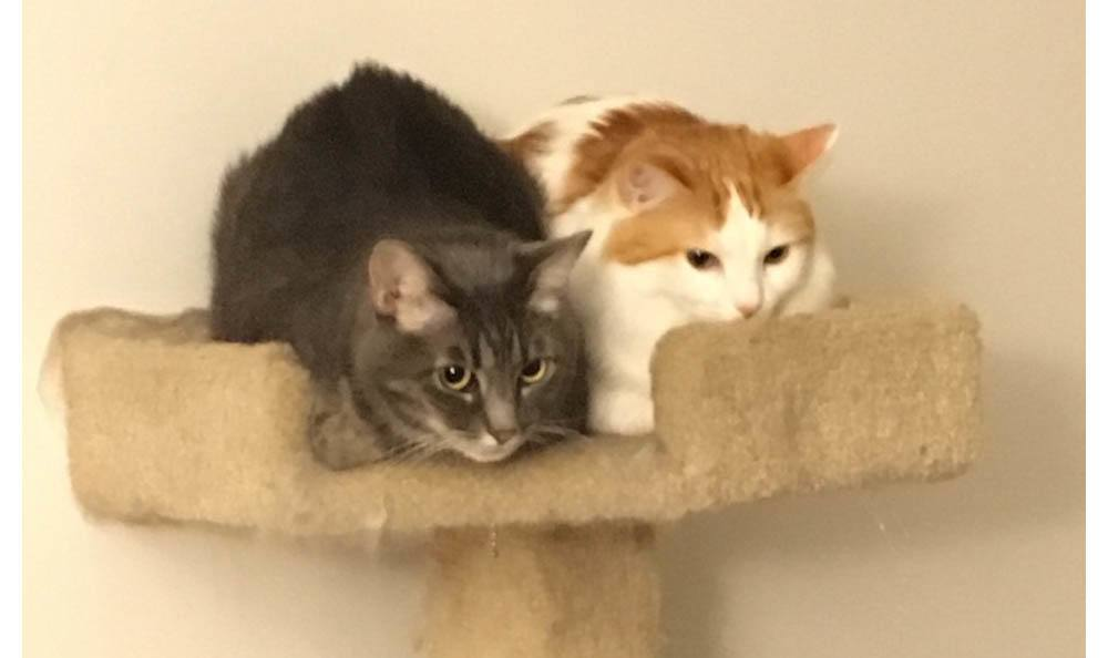 Cats In A Cat Tree At Central Coast Pet Emergency Clinic