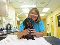 Aurora Webb at Bothell Animal Hospital