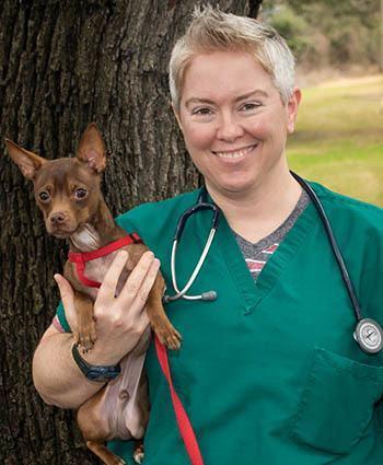 Animal Hospital Veterinarian in Austin