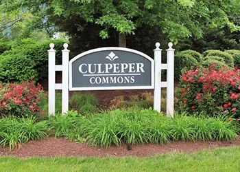 Enjoy the flowers at Culpeper Commons