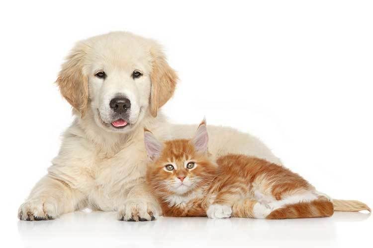 Pet Friendly Apartments in Freehold, NJ | Eagle Rock Apartments at ...
