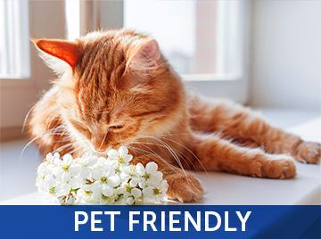 Pet friendly at the apartments for rent in Naples