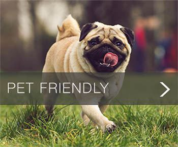 Pet Friendly apartments at Marcella at Town Center