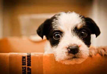 Pet friendly apartments in Greenville