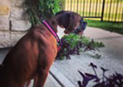Resident pet, Frannie