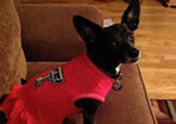 Resident pet, Lola