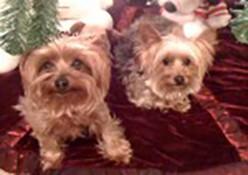 Resident pets, Teddy & Precious