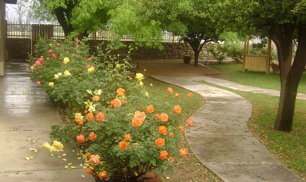 Landscaping at Desert Peaks Assisted Living and Memory Care in NM