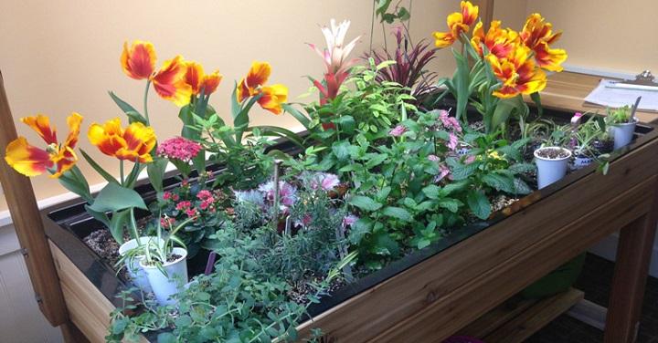 Award Winning Garden Recognized at First Hill Community