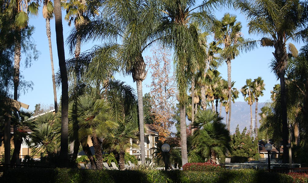 View of Redlands Lawn and Tennis Club through one of the many green spaces and trees surrounding the property