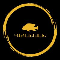 412 Cichlids Store Logo