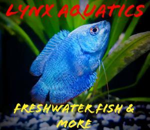 Lynx Aquatics Store Logo
