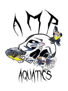 AMP Aquatics Logo