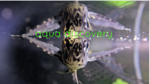 AQUA DISCOVERY Logo