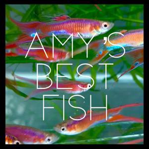 Amy's Best Fish, LLC Logo