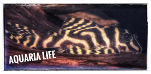 Aquaria Life Logo