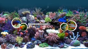 Aquariumkonnect Logo