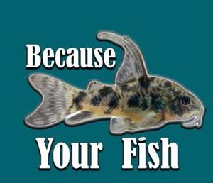 Because Your Fish Logo