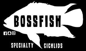 Bossfish Store Logo