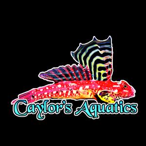 CAYLOR'S AQUATICS Logo