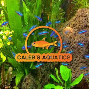 Calebs Aquatics Store Logo