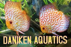 DANIKEN AQUATICS Store Logo
