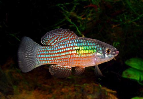 NATIVE FLORIDA FISH