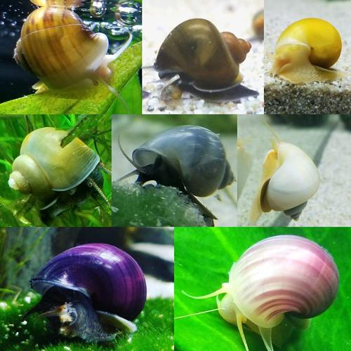10 Assorted Mystery Snails - (Nickel to Quarter)
