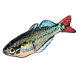 Hoon Aquatics Logo