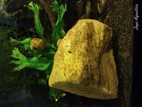 Java Fern On Stone