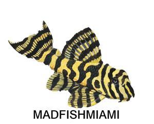 Madfishmiami Store Logo