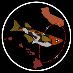 NOKAOIMEDAKAS Logo