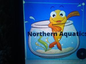 Northern Aquatics Logo