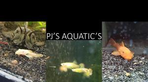 PJsAquatics Store Logo