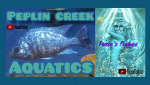 Peplin Creek Aquatics Logo
