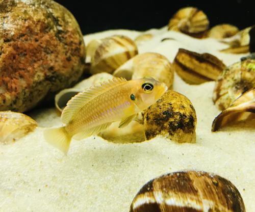 Shell Dweller